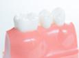使える歯の根の利用方法